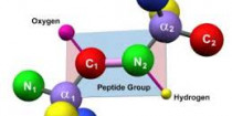 Peptides and Peptide Synthesisers